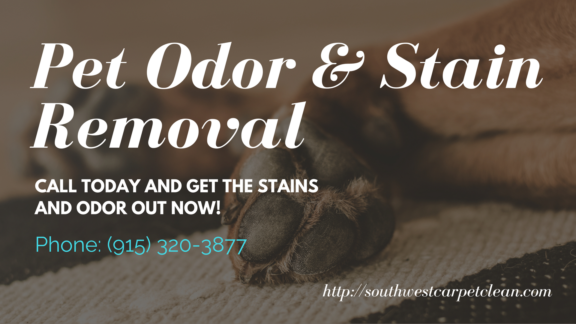 Pet Odor and Stain Removal in El Paso
